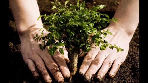 Sadzimy drzewka w Izraelu!